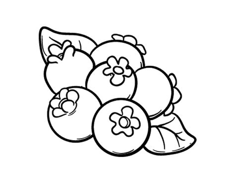 blueberries coloring page coloringcrew com