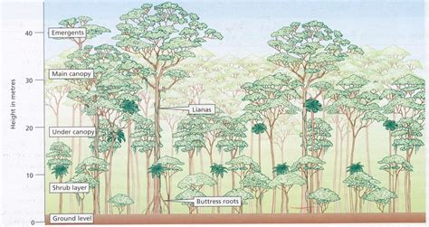 How Do Plants Adapt To The Tropical Rainforest - climate and ecosystems the geographer online