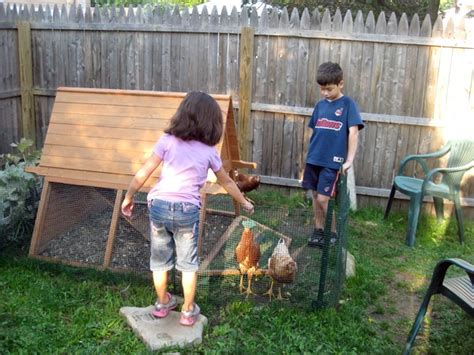 from cities to suburbs raising backyard chickens is all