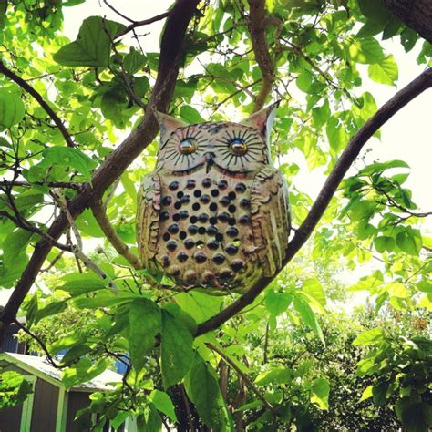 Garden Owls The 48 Best Images About Owls In The Garden On