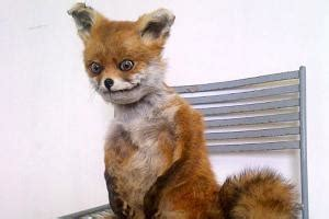 Stoned Fox Meme - stoned fox kappit