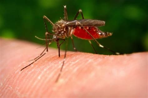 how to get rid of mosquitoes in the house how to get rid of mosquito bites fast home remedies