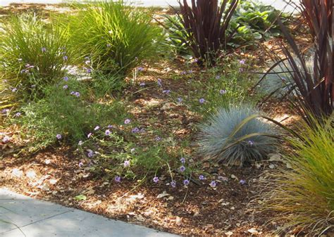 Favorite California Native Plants I Design With in No. CA mediterranean landscape