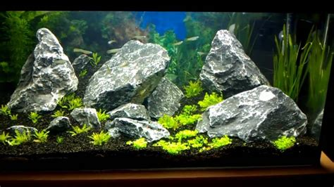 iwagumi aquascape 54l iwagumi aquascape youtube