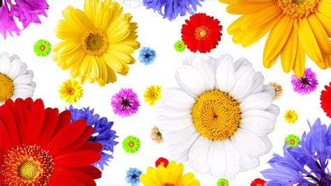 flower wallpaper tab flowers wallpaper for android driverlayer search engine