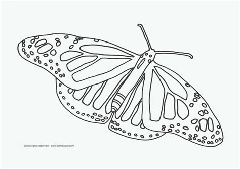 rainforest butterfly coloring pages hungary flag countries coloring pages book rainforest