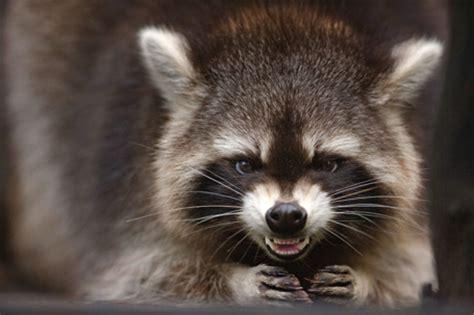 rabies precautions encouraged | chatham emergency