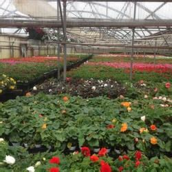 salt ls and plants quality flowers plants 16 billeder planteskoler og