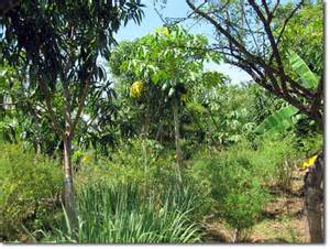 subtropical edible forest gardens design intensive with