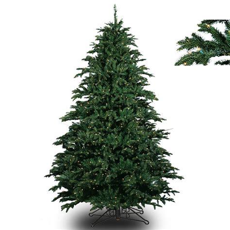 barcana cashmere fir slim barcana trees