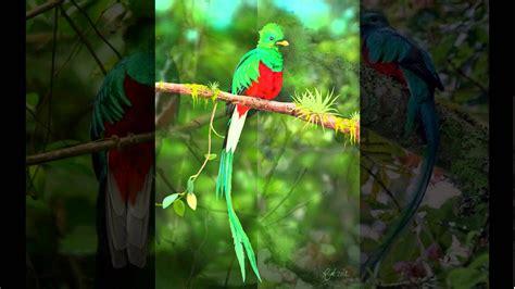 imagenes de quetzal a lapiz imagenes del quetzal youtube