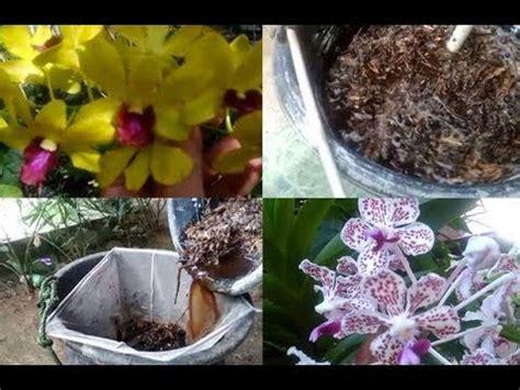 Pupuk Bunga Cair cara membuat pupuk cair untuk bunga anggrek dan tanaman