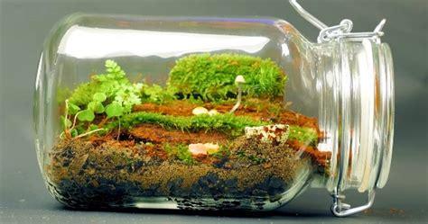 Ewiges Terrarium Bauen by Forest In A Bottle Miniworlds