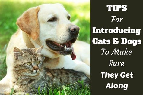 how to a cat and to get along how to introduce cats and dogs and make sure they get along
