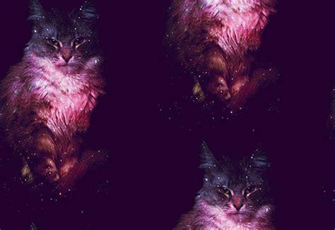 wallpaper cat galaxy galaxy cat quotes quotesgram