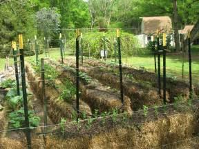 straw bale garden one gardener s project walter reeves