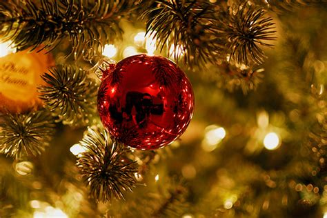 christmas tree photography ideas