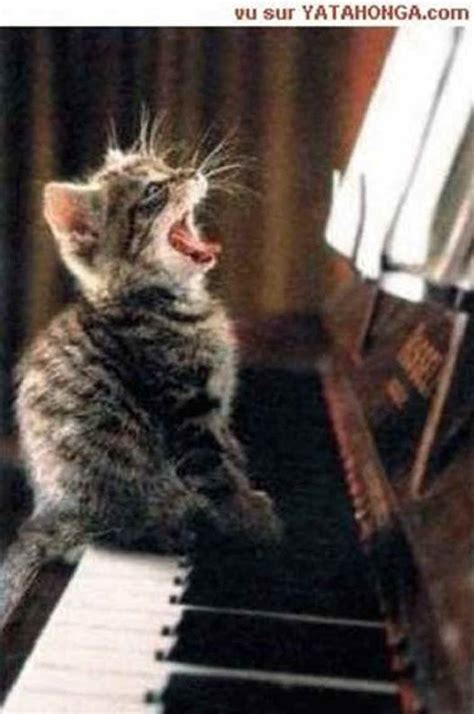 Singing Cat Meme - humorous funny and cute animal photos 008 from all