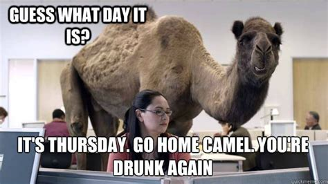 Camel Hump Day Meme - happy hump day camel www pixshark com images galleries with a bite