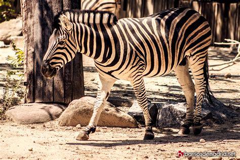 descuentos entradas zoo barcelona descuentos para el zoo de madrid descuentos para el zoo