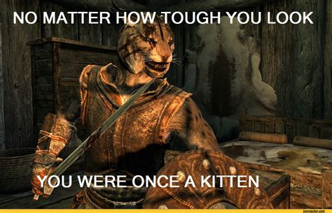 Skyrim Meme - khajiit pictures and jokes the elder scrolls games