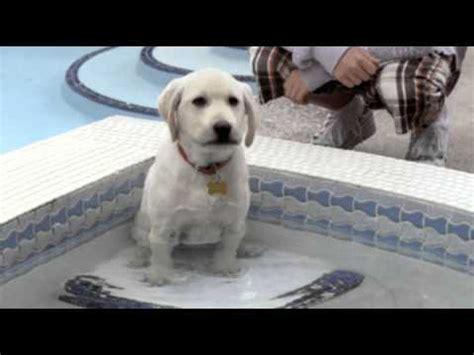 marley me the puppy years marley me the puppy years trailer