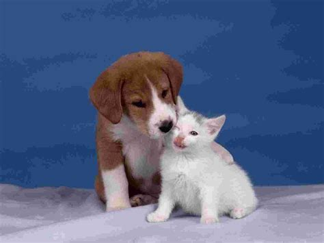 puppy lover puppy wallpaper cubs animals nature wallpaper collection
