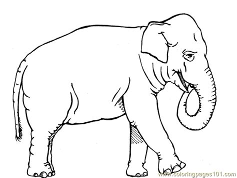 coloring pages african elephant animals gt elephant