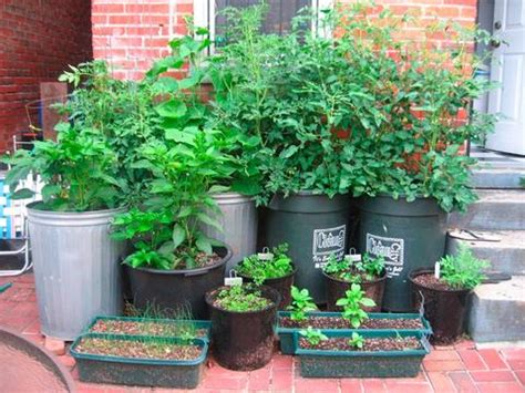 organic container gardening for beginners what s your garden style s heirloom seeds