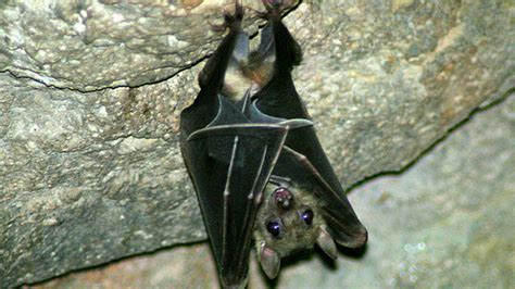 petition 183 list bats as endangered species tell the
