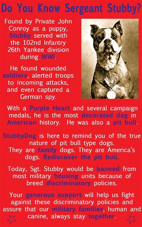 Sgt Stubby Poster The 25 Best Sergeant Stubby Ideas On War Dogs When Is Anzac Day And Dogs