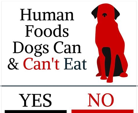 things dogs can t eat human foods dogs can can t eat fallinpets
