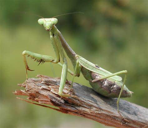 imágenes de animales insectívoros insectos im 225 genes taringa