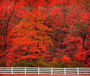 peak fall colors america the beautiful in autumn peak fall foliage dates