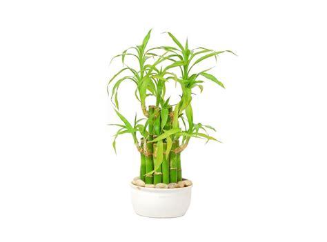 plantas de interior altas plantas de interior altas gallery of flores decoracin
