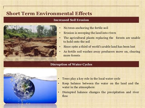 Causes And Effect Of Deforestation Essay by Essays On Deforestation