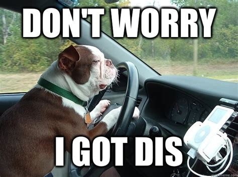 Wrrrry Meme - don t worry i got dis dog driving quickmeme