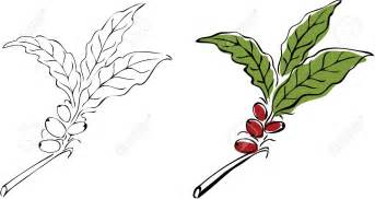 seed clipart coffee grounds pencil and in color seed coffee plant clipart pencil and in color coffee plant