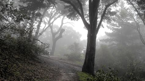 grey nature wallpaper the park in the grey fog 1920 x 1075 nature