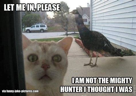 Peacock Meme - funny cat peacock meme joke picture image animals with