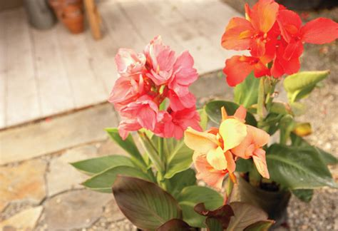 summer flowering bulbs planting guide   home depot