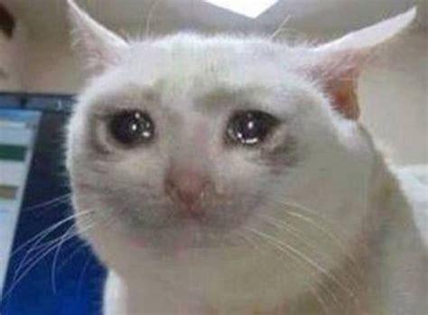 imagenes de gatitos llorando memes de gato llorando galeria 3592 imagenes