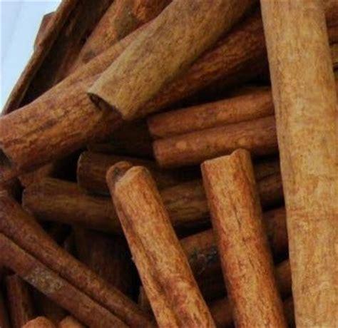 Kayu Manis kulit manis cinnamomum verum synonym c zeylanicum traditional plants