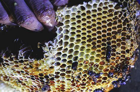lebah membuat madu in english mongabay co id
