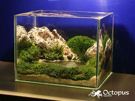Small Aquarium Aquascape by Slobodan Lazarevic Mountain Lake