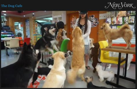 puppy cafe la cafes food dogs questionable i cat