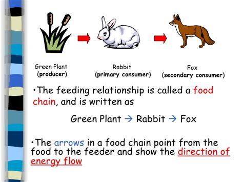 Definition Of Animal Biology | 5 environmental biology