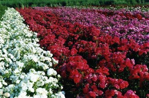 giardini in fiore giardini in fiore giardinaggio