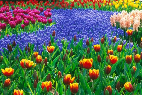 Beautiful Flower Garden Wallpaper Wonderful Flower Garden Cool Wallpapers
