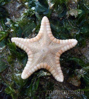 Bintang Laut Warna aneh gak aneh macam macam jenis bintang laut yang warna warni keren dan indah